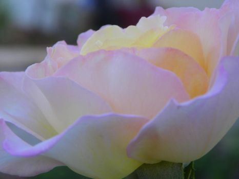 Touch of Pink by KathAllyss