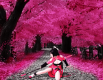 Litchi(Shermie) under the cherry blossom trees by Ludez