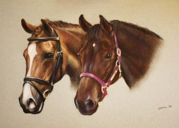 Two horses by corienb