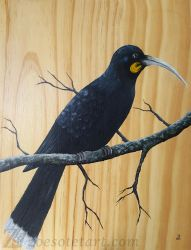 Huia by ZoeSotet