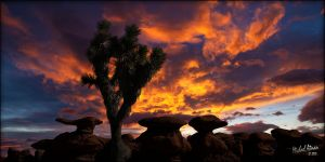 Trees at sunset 4 by MichaelAtman