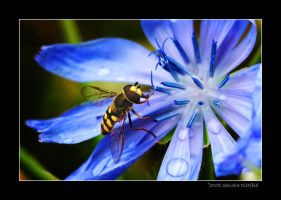 Hover fly 2 by grugster