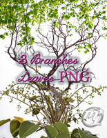 3 Branches Leaves TRANSPARENT!!!! PNG by MLauviah