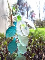 Snow drop flower stick in glass and brass by fairyfrog