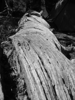 Fallen Log by deadeye-stock