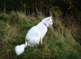 White cat in the grass by NaviStock