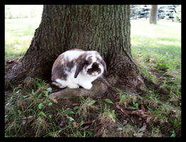 This is my tree now by Listener-Liserian