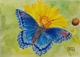 World Watercolor Month - Day 6 (Blue Butterfly) by Harmony1965
