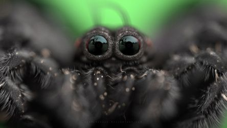 Along Came a Spider by abdelrahman