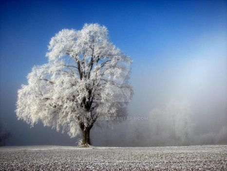 Big Tree in white frost by fotoag