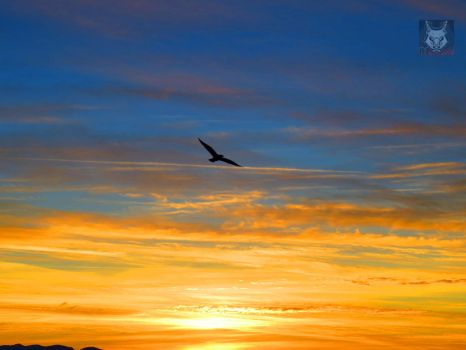 Seagull Flying Over Gold And Blue by wolfwings1