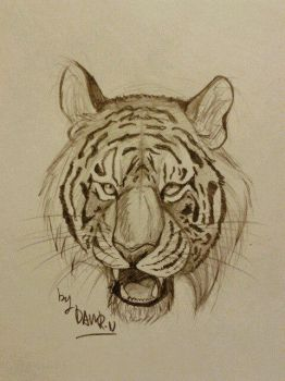 Tiger Sketch #1 by Dawron