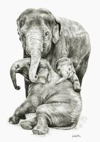 Elephant family by Lukas1212