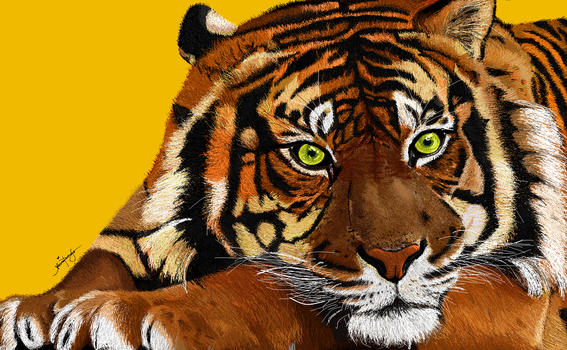 Tiger (MS Paint) by Jerina-Baliw
