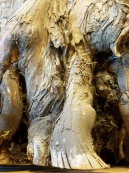 Gnarled Trunk Close by RD-Stock