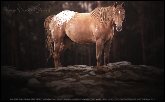 Different by equinestudios