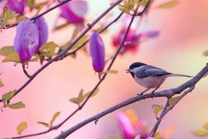 Sweet Magnolia Song by clippercarrillo