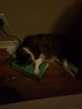 hes laying on my clock by goldenworldgamer