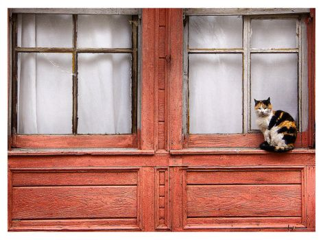Cat in Tekirdag 2 by gkhn84