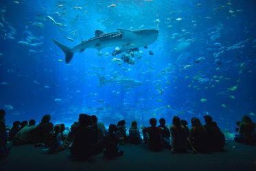 Georgia Aquarium by E-Davila-Photography