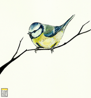 Blue Tit by FionaCreates