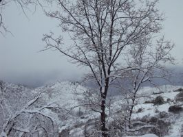 Snow In The Mountains-5 by Bearie23