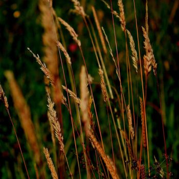 Grasses Pt.1 by Haila-OurFarewell