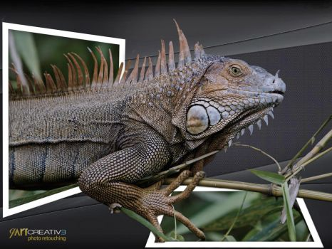 Iguana  outofbond by qartcreative