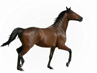 Thoroughbred Precut by TennesseeHorses
