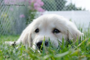 Puppy eyes... by TheLittleMaja