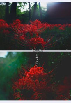 lost red _022015 by ericzoe