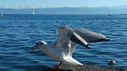 World of Seagulls at the blue sea
