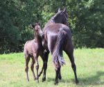 Mare and Foal 42 by MountainViewStock
