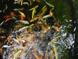 Fish by KTVL-resources