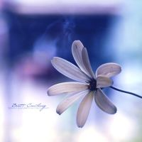 Little Flower... by sourcow