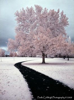 Infrared Path to Cotton Candy by La-Vita-a-Bella