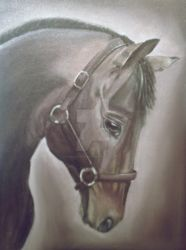 Willow - Horse Portrait Oil Painting by HayleyHuckson