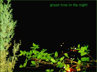 GREEN LOVE  OF THE NIGHT by aybars