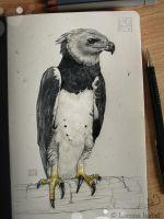 Harpy Eagle by Loisa