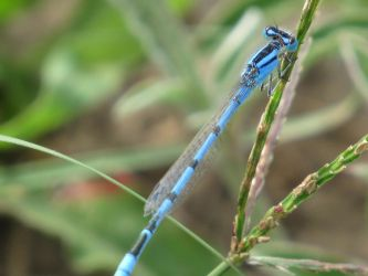Beaming Blue Dragonfly by Mechalight