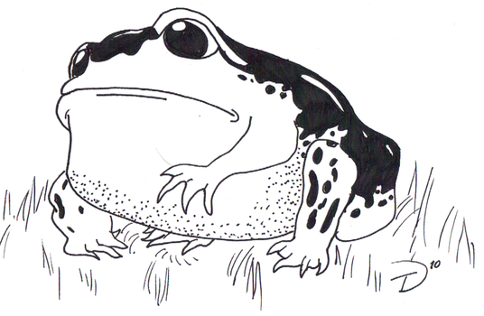 Frog With No Name by RagingArtist