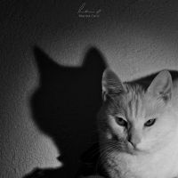 Light and Shadow by MarinaCoric