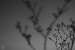 Creosote 04 by vicioussuspicious