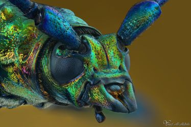 Musk Beetle by AlHabshi