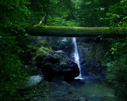 Forest Falls Pre-Made by silent-scenes