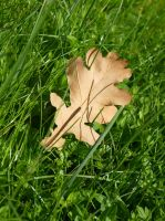 Oak Leaf by K1ku-Stock
