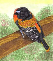 Oriole for Grandpa by Fwup-Baby