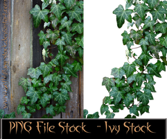 PNG-File-Ivy-Stock-by-GothLyllyOn-Stock by GothLyllyOn-Sotck