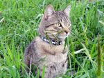 Grass Nosed Cat by MandyMcPebbleFace