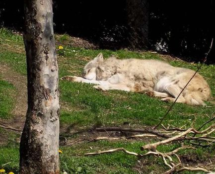 Let Sleeping Wolves Lie by Xiira